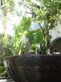 Fountain casa convento la almoraina.jpg