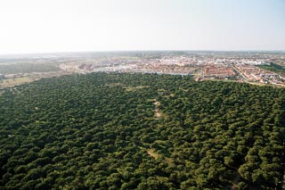 Natural pinares.jpg