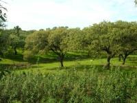 Vegetacionpdg.jpg